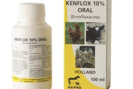 kenflox-10-oral-100-ml-2014